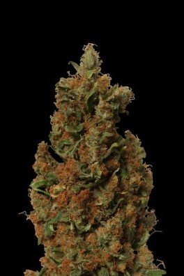 Red Diesel (Barney's Farm)