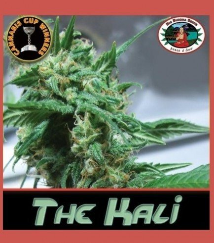 The Kali (Big Buddha Seeds)