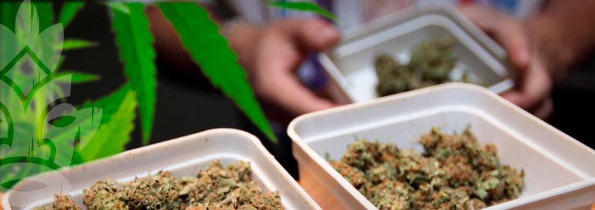 Cannabis Verkaufen