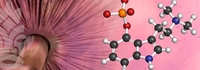 Psylocibin chemisches Molekül