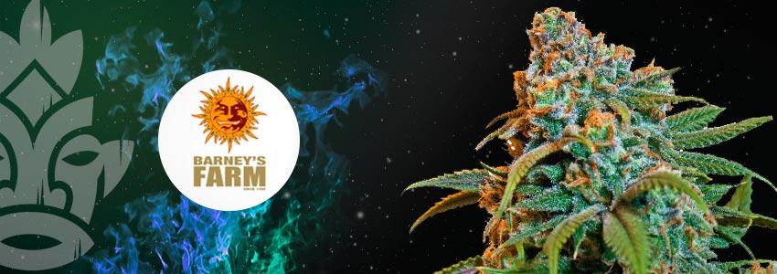 LIBERTY HAZE—25% THC