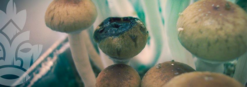 Arten Der Pilzkontamination