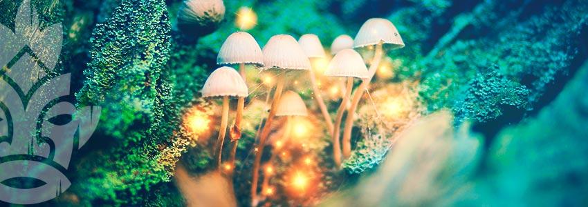 Wie Mikrodosiert Man Zauberpilze Und Zaubertrüffel?