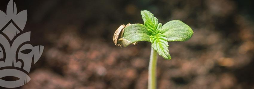 Um Junge Pflanzen Kümmern