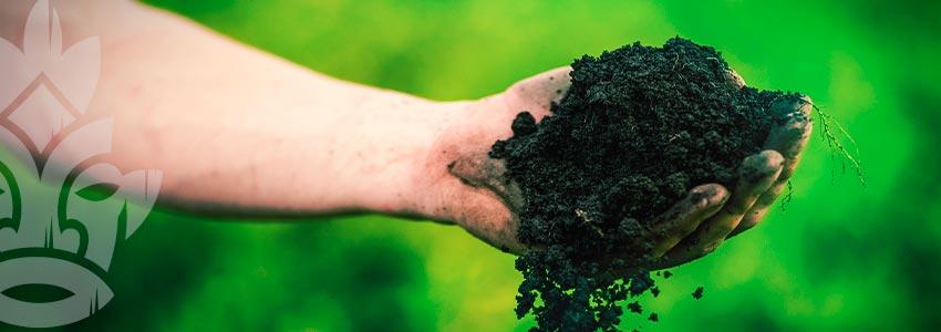 Organischen Boden Für Weltklasse-cannabis Anmachen