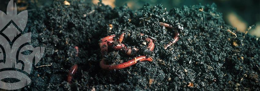 Würmer