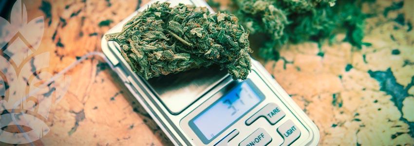 Checkliste Für Den Erstmaligen Cannabiskonsum: Dosierung