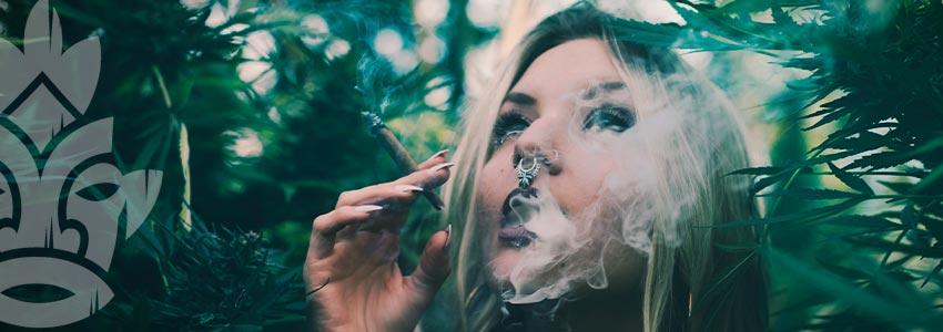Warum Sollte Man Gras Mit Niedrigem Thc-gehalt Rauchen?