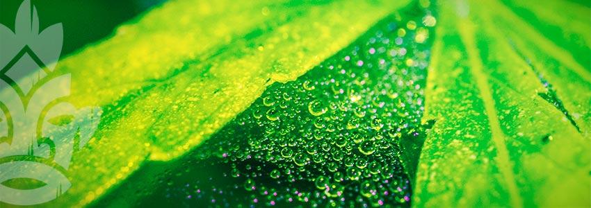 Worauf Beruht Die Wirkung Von Neemöl Als Biologisches Insektizid?