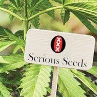 Zum kompletten Sortiment von Serious Seeds