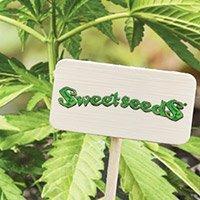 Zum Kompletten Sortiment Von Sweet Seeds