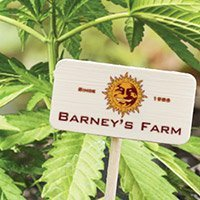 Zum kompletten Sortiment von Barney's Farm