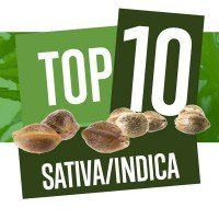 Top 10 Sativa-Indica Cannabissorten