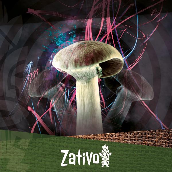 Zativo - Tipps für eine bessere Erfahrung mit Zauberpilzen