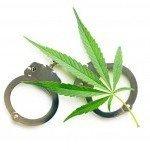 8 Gründe warum Leute beim Anbau von Cannabis auffliegen