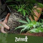 Wann ist die beste Zeit zum Umpflanzen?