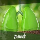 Das Rauchen von Cannabis und dessen Auswirkungen auf die Lunge