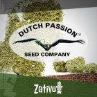 Vorstellung: 7 Neue Sorten Von Dutch Passion