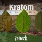 Die Geschichte Von Kratom