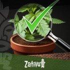 8 Tipps Zur Erkennung Von Gutem Cannabis