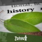 Die Geschichte Von Salvia Divinorum