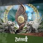 Sticky Beast gewinnt als beste autoflowering Cannabissorte bei Highlife!