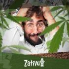 Die Top 7 Cannabissorten, Um Stress Abzubauen