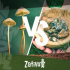 Der Unterschied zwischen psychedelischen Pilzen und psychedelischen Trüffeln