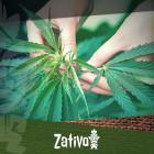 Eine umfangreiche Anleitung für den biologischen Cannabisanbau