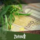 Wie man mit einem schmalen Geldbeutel Cannabis anbaut