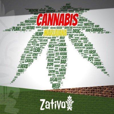 Warum Wird Cannabis Auch Marijuana Genannt?