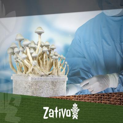 Magic Mushrooms - Wie Man Steril Arbeitet