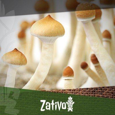 Die Geschichte Von Magic Mushrooms
