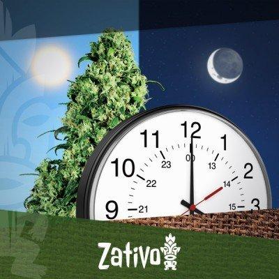 Wie Viele Stunden Licht Für Eine Autoflowering Pflanze?