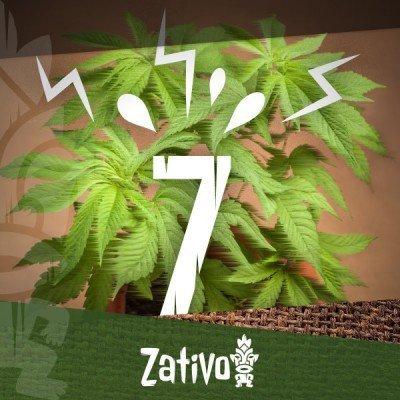 7 Auslöser Von Stress Für Cannabispflanzen