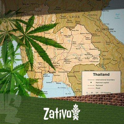 Der Ursprung Von Thai-Sorten