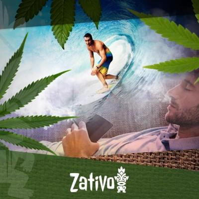 Die Verschiedenen Cannabisarten Und Ihre Wirkungen