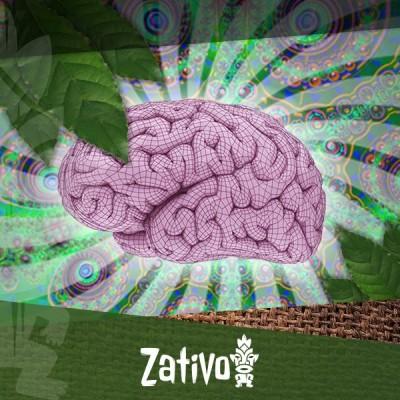 Wie beeinflusst Ayahuasca Dein Gehirn?