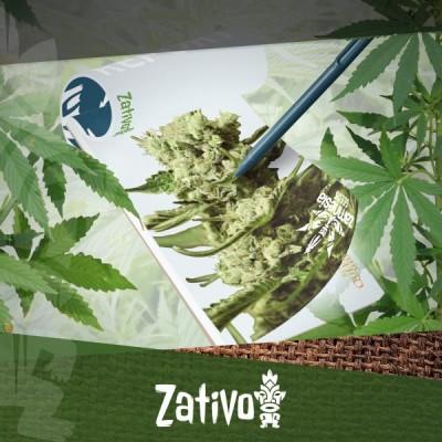 Anbaubericht: Neue Cannabissorten von Zamnesia und Royal Queen Seeds anbauen