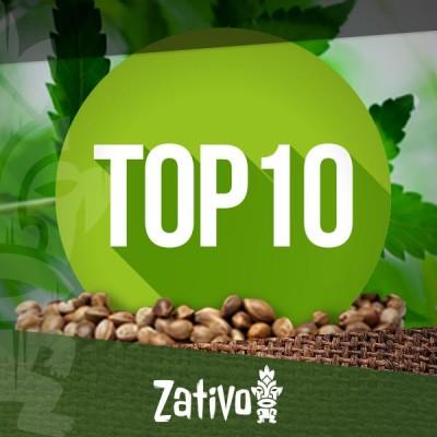 Top 10 der Cannabis-Saatgutbanken