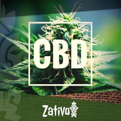 Die besten CBD-reichen Cannabissorten