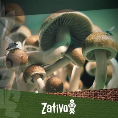 Wie man Pilzkontamination erkennt und verhindert