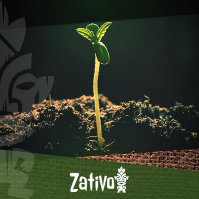 Bodenporosität Beim Anbau Von Cannabis